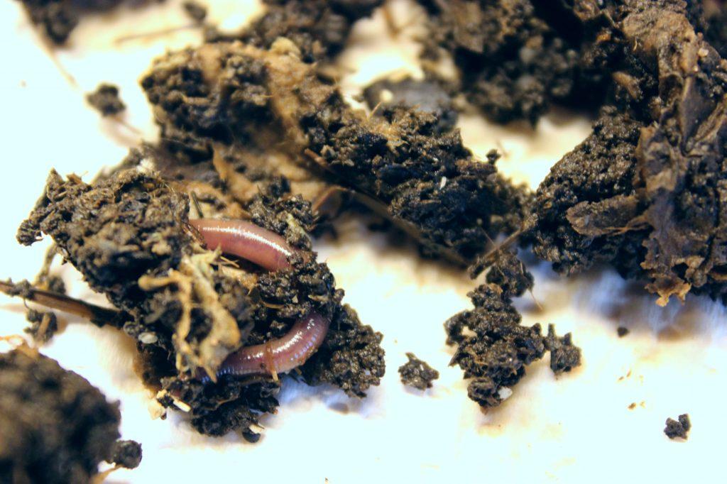 wurmkiste bio blog abfall müll würmer kompost kompostierung vegan