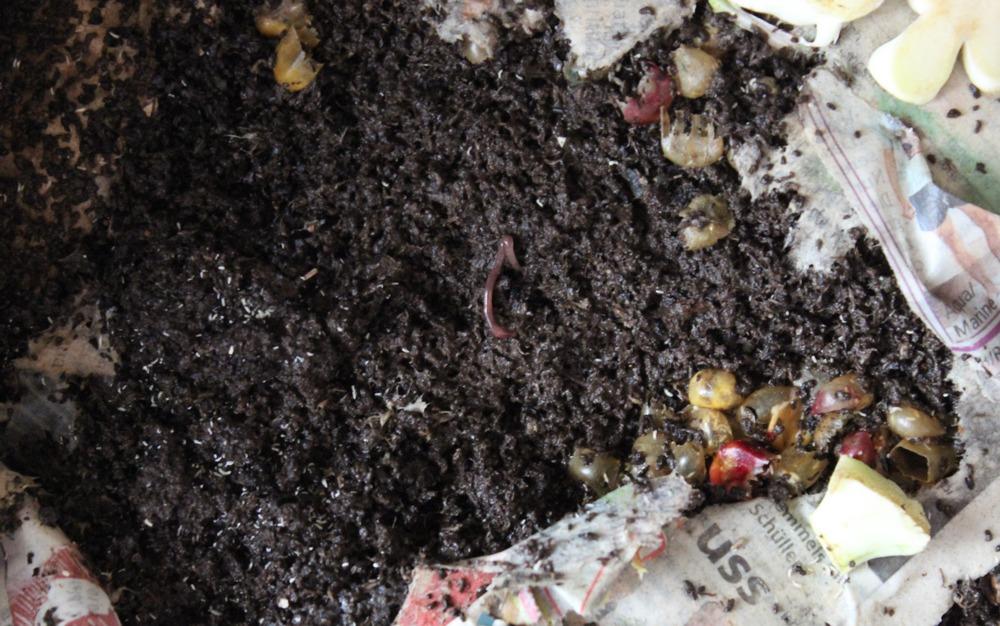 Wurmkiste wurmcafe wurmbox kompost wurmkompost anleitung selber bauen würmer küchenabfall futter 3