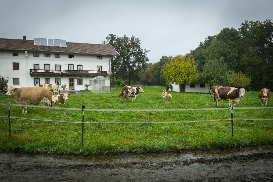 denns-chiemgauer naturfleisch-konnibille-20