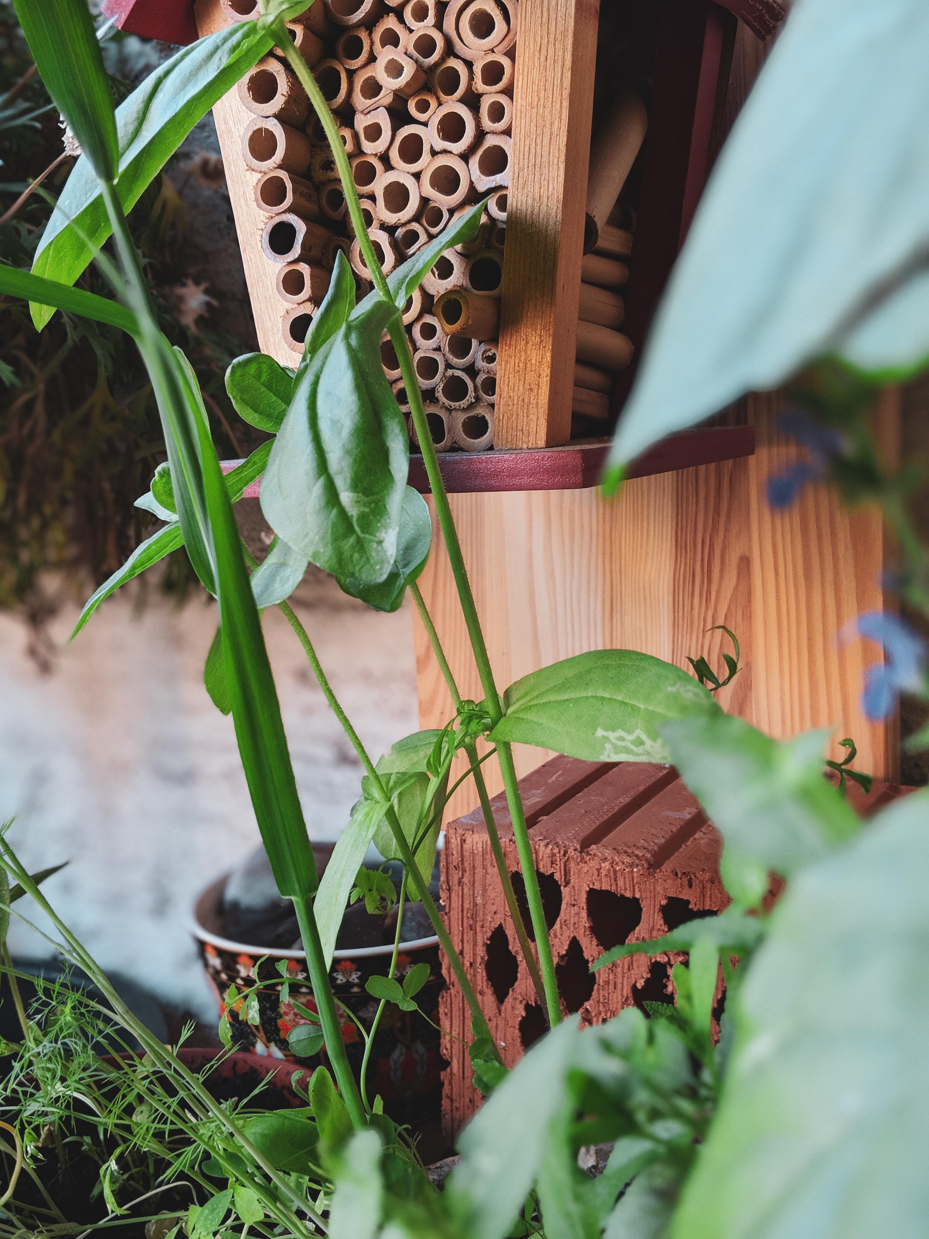 So Gestaltest Du Deinen Balkon Bienenfreundlich Bio Blog