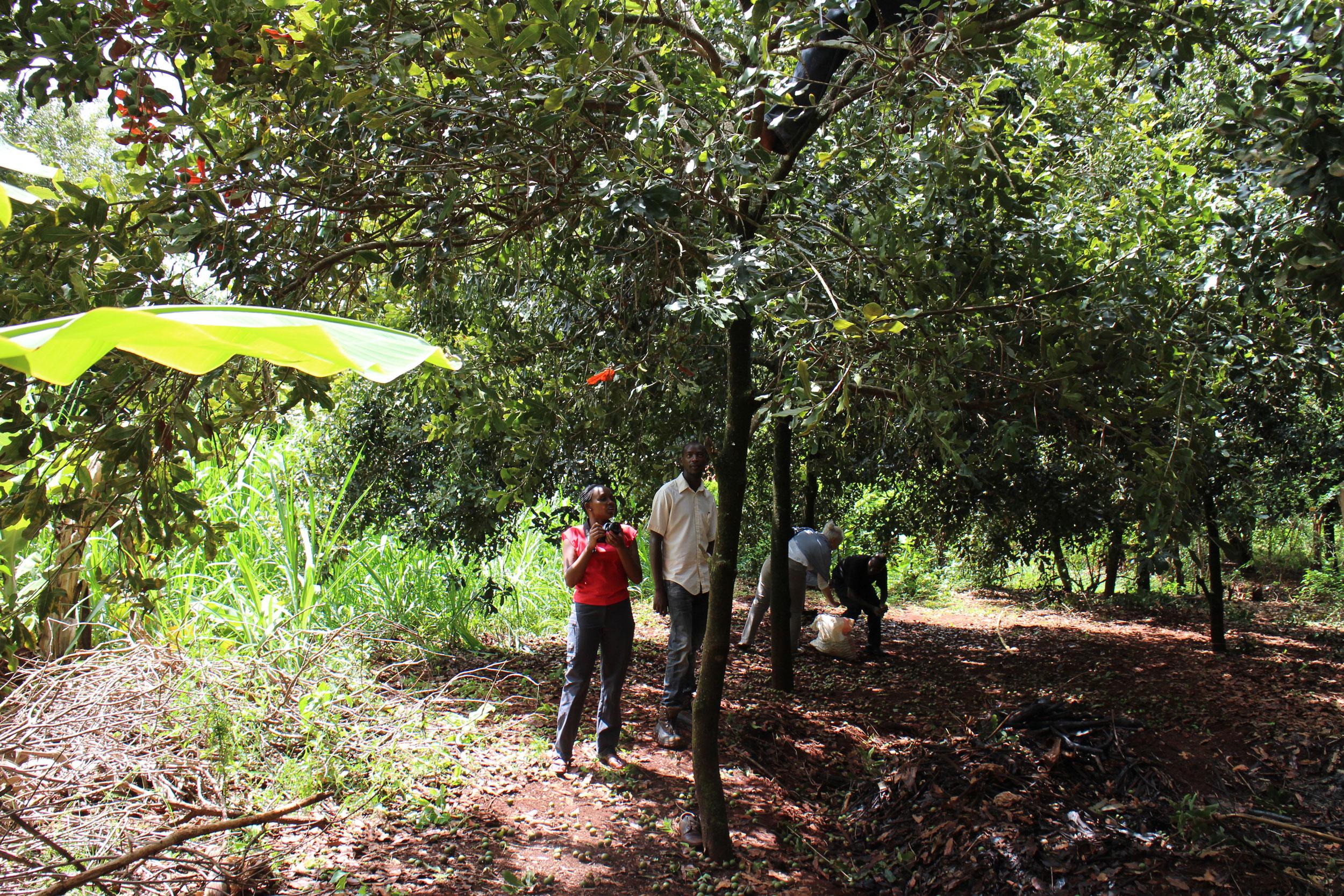Anbau-Projekte Naturkosmetik