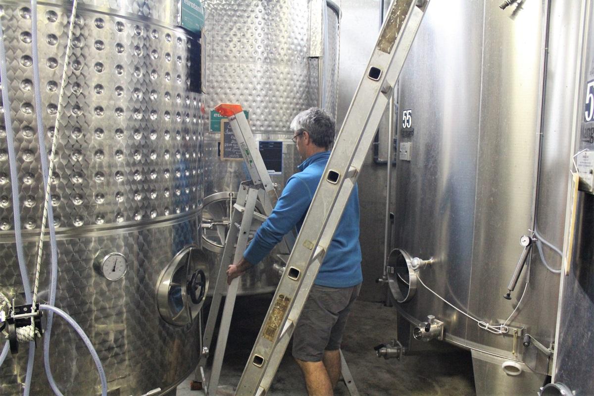 Weinernte Weingut Stahltank