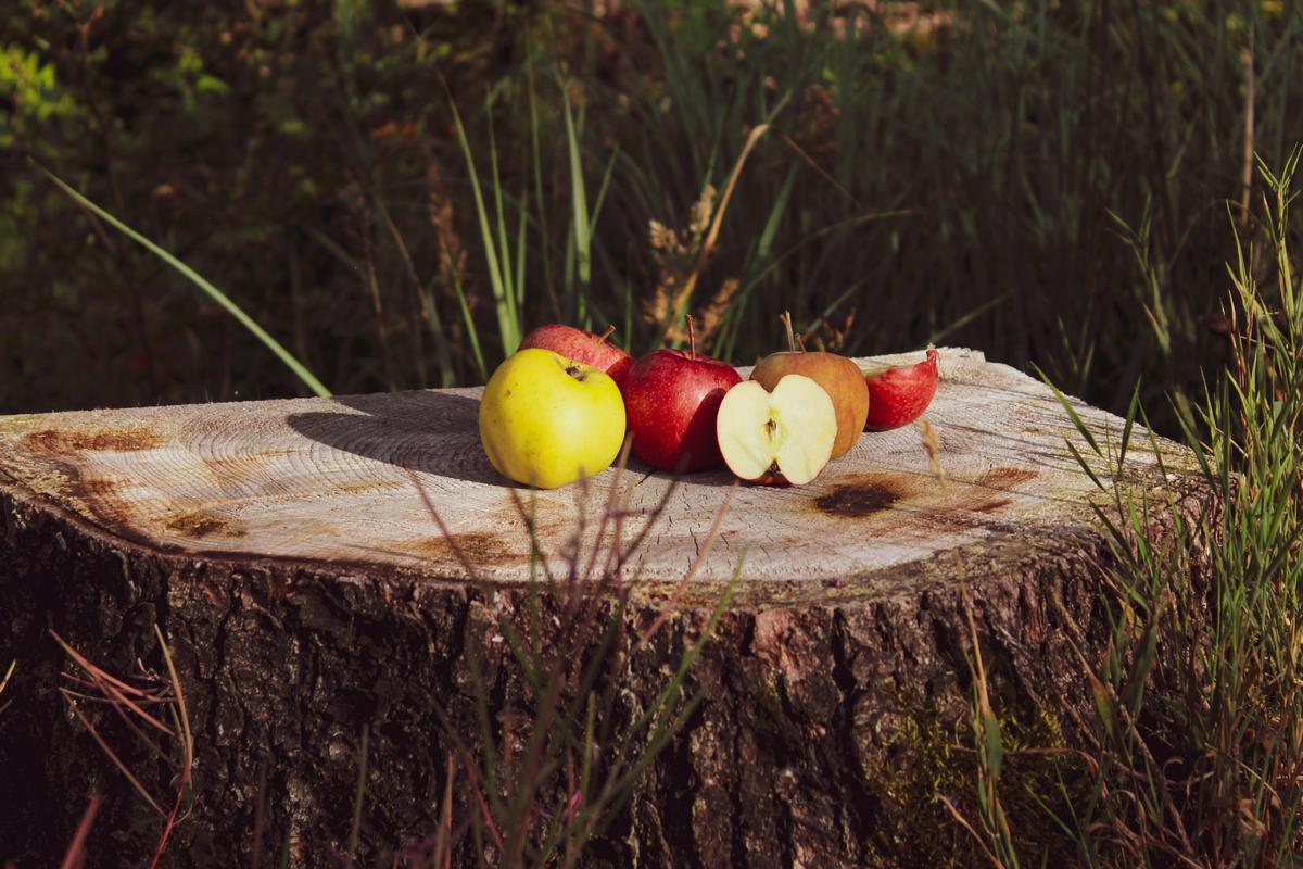 Herbst Apfel bio ökologisch züchtung apfelpunsch vegan apfelsaft (1)